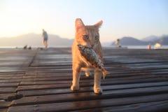 Κυνηγώντας γάτα Στοκ φωτογραφία με δικαίωμα ελεύθερης χρήσης