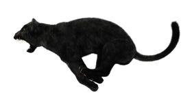 Κυνηγώντας μαύρος πάνθηρας Στοκ φωτογραφίες με δικαίωμα ελεύθερης χρήσης