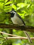 Κυνηγώντας πουλί Στοκ φωτογραφία με δικαίωμα ελεύθερης χρήσης