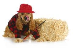 Κυνηγώντας σκυλί στοκ φωτογραφίες