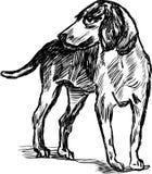 Κυνηγώντας σκυλί Στοκ Εικόνες