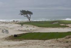 Κυπαρίσσι, άμμος, τύρφη και κυματωγή Στοκ Εικόνες
