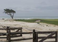 Κυπαρίσσι, άμμος, τύρφη και κυματωγή Στοκ φωτογραφία με δικαίωμα ελεύθερης χρήσης