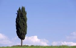 κυπαρίσσι Ιταλία Τοσκάνη στοκ εικόνες