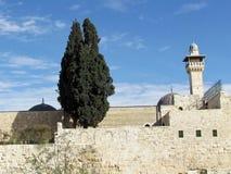 Κυπαρίσσι 2012 μουσουλμανικών τεμενών της Ιερουσαλήμ Al-Aqsa Στοκ εικόνα με δικαίωμα ελεύθερης χρήσης