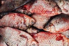 Κυπρίνος στην αγορά θέσεων ψαριών Στοκ Εικόνες