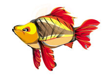 Κυπρίνος ψαριών Στοκ φωτογραφία με δικαίωμα ελεύθερης χρήσης