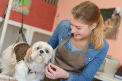 Κυρία που εργάζεται με το σκυλί στοκ εικόνες
