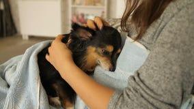 Κυρία που κτυπά το μικρό σκυλί απόθεμα βίντεο