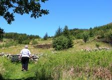 Κυρία που περπατά στο μονοπάτι επαρχίας με τα δέντρα Στοκ φωτογραφία με δικαίωμα ελεύθερης χρήσης