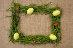 κυρία χλόης πλαισίων αυγώ&nu Στοκ Εικόνα