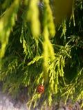 Κυρία Bug Στοκ εικόνες με δικαίωμα ελεύθερης χρήσης