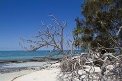Κυρία Musgrave Island Στοκ εικόνα με δικαίωμα ελεύθερης χρήσης