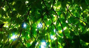 Κυρτοί κλάδοι ενός δέντρου Στοκ Φωτογραφίες