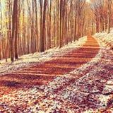 Κυρτός ζωηρόχρωμος χιονώδης δασικός δρόμος στο πρόωρο χιόνι χειμερινών δασικό φρέσκο σκονών Στοκ Φωτογραφίες