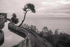 Κυρτό κανάλι με το νερό με το δέντρο και λουλούδια ως δημιουργικό φυσικό υπόβαθρο που αυξάνεται επάνω επάνω από τον ωκεανό στο ig Στοκ Φωτογραφίες