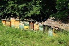 κυψέλες μελισσών Στοκ Φωτογραφία
