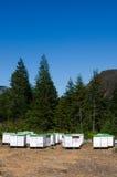 κυψέλες μελισσών Στοκ εικόνες με δικαίωμα ελεύθερης χρήσης