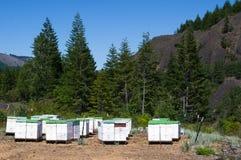 κυψέλες μελισσών Στοκ Εικόνα
