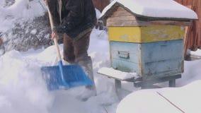 Κυψέλες που παγιδεύονται στο χιόνι απόθεμα βίντεο