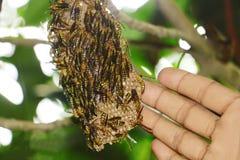 Κυψέλη και μέλισσα με το χέρι του φωτογράφου στοκ εικόνες με δικαίωμα ελεύθερης χρήσης