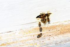 Κυψέλη μελισσών στοκ φωτογραφία