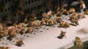 Κυψέλη με τις μέλισσες στο μελισσουργείο απόθεμα βίντεο