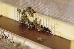 Κυψέλες μελισσών κυψελών στοκ εικόνες με δικαίωμα ελεύθερης χρήσης