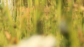 Κυψέλες μελισσών μελιού απόθεμα βίντεο