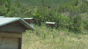 Κυψέλες μελισσών σε ένα βουνό απόθεμα βίντεο