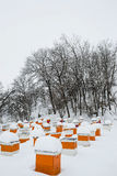 Κυψέλες μελισσών το χειμώνα Στοκ φωτογραφίες με δικαίωμα ελεύθερης χρήσης