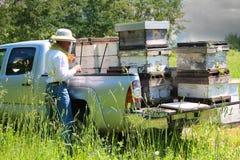 Κυψέλες φόρτωσης μελισσοκόμων στην επανάλειψη Στοκ φωτογραφία με δικαίωμα ελεύθερης χρήσης