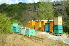 Κυψέλη μελισσών στα της Κριμαίας βουνά Στοκ Φωτογραφία