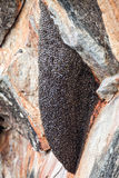 Κυψέλη των σφηκών Φωλιά Hornet Στοκ Φωτογραφία