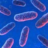 Κυψελοειδή organelle μιτοχόνδρια Στοκ εικόνα με δικαίωμα ελεύθερης χρήσης