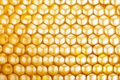 Κυψελωτή μακροεντολή ως υπόβαθρο Προϊόντα μελισσοκομίας Apitherapy Στοκ Εικόνα