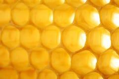 Κυψελωτή μακροεντολή ως υπόβαθρο Προϊόντα μελισσοκομίας Apitherapy Στοκ Εικόνες