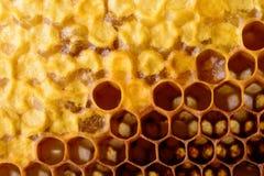 Κυψελωτή μακροεντολή ως υπόβαθρο Προϊόντα μελισσοκομίας Apitherapy Στοκ εικόνα με δικαίωμα ελεύθερης χρήσης