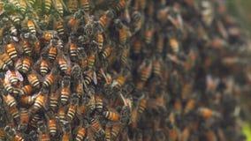 Κυψελωτή μέλισσα φιλμ μικρού μήκους