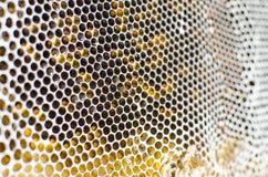 Κυψελωτή δομή Στοκ Φωτογραφία