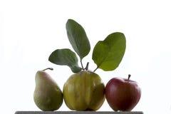 Κυδώνι μήλων αχλαδιών Στοκ εικόνα με δικαίωμα ελεύθερης χρήσης