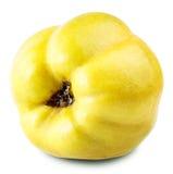 Κυδώνι της Apple Στοκ φωτογραφίες με δικαίωμα ελεύθερης χρήσης