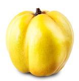 Κυδώνι της Apple Στοκ Φωτογραφίες