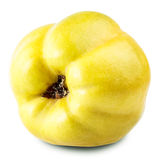 Κυδώνι της Apple Στοκ φωτογραφία με δικαίωμα ελεύθερης χρήσης