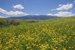 Κυλώντας λιβάδι και χρυσά wildflowers Στοκ Εικόνα