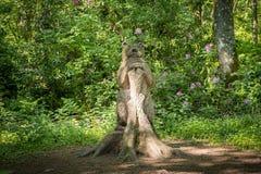 Κωμική γλυπτική μιας αρκούδας που κλίνει σε ένα πάρκο Troon Σκωτία Fullarton δέντρων στοκ φωτογραφία με δικαίωμα ελεύθερης χρήσης