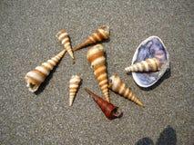 Κωνικά θαλασσινά κοχύλια στοκ εικόνα με δικαίωμα ελεύθερης χρήσης