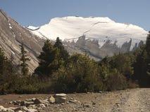 κωνοφόρα δασικά οδικά δάση βουνών στοκ εικόνες