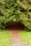 κωνοφόρα δέντρα μονοπατιών  Στοκ φωτογραφίες με δικαίωμα ελεύθερης χρήσης