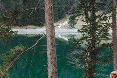 Κωνοφόρα δέντρα μπροστά από την πράσινη λίμνη βουνών Seelapsee, Α Στοκ Φωτογραφίες